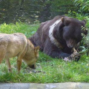 Stichting BEARS in MIND image 1