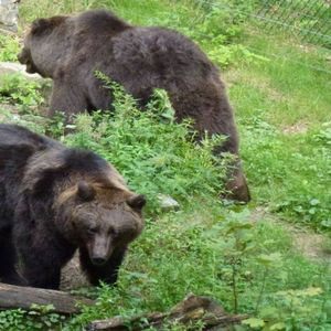 Stichting BEARS in MIND image 2