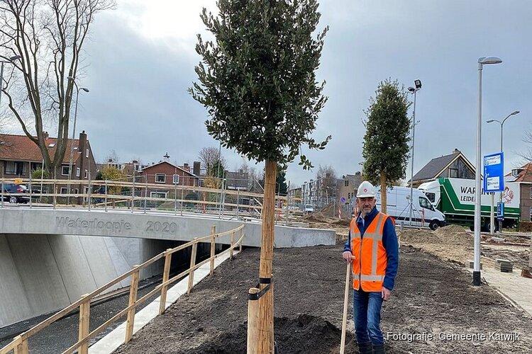 Eerste boom bij nieuwe fietstunnel Zeeweg